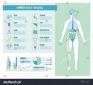 Human Body Health Care Infographics Medical Stock Vector