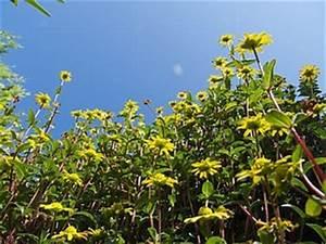 Geranien Gelbe Blätter : balkonbepflanzung im sommer tipps zur pflege und pflanzenwahl ~ Orissabook.com Haus und Dekorationen