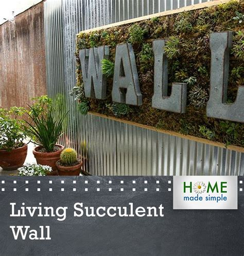 living wall  succulents creates  art piece