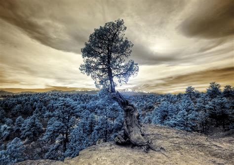 Download wallpaper 3000x2132 tree, photoshop, forest, hill ...