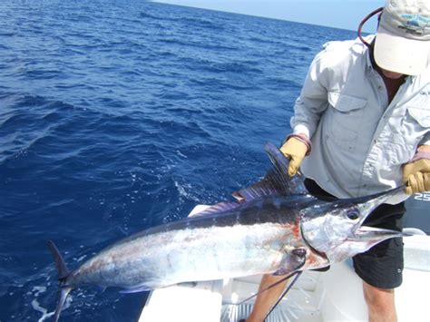 marlin stuart fishing charter florida fl
