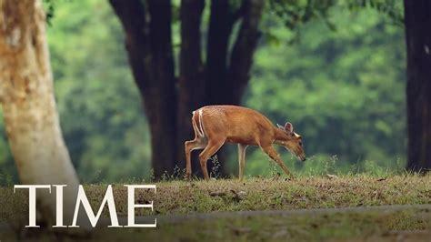 Health Officials Are Worried That 'zombie Deer Disease