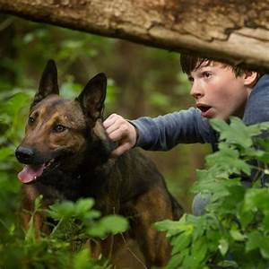 """Max"" the Movie tells the tale of a brave Military War Dog ..."
