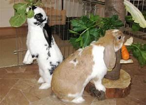 Futter Für Wildvögel Selber Machen : kaninchen info besch ftigung ~ Michelbontemps.com Haus und Dekorationen