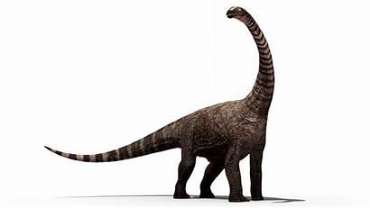 Dinosaur Transparent Bones Dinosaurs Background Clipart Illustration
