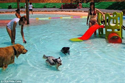 Dog Swimming Pool Opens In Spain With Waterslide And Extra