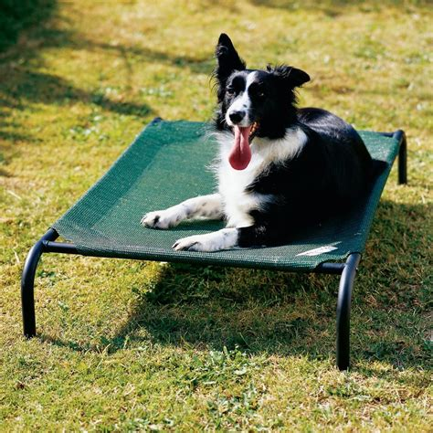 27419 coolaroo elevated pet bed coolaroo bed large dogs 51 1 x 31 5 entirelypets