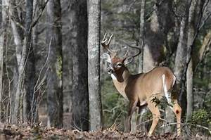 Hunting Maryland's Bow and Blackpowder Seasons | Mossy Oak