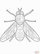 Fly Coloring Pages Cartoon Horse Flying Bird Insect Insects Outline Popular Printable Getcoloringpages sketch template