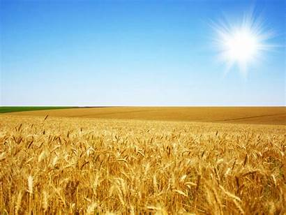 Harvest Landscape Wheat Fields Wallpapers Wallpaperbro Farm