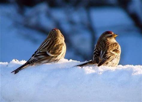 do birds feel cold quora