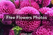 Flower images · Pexels · Free Stock Photos