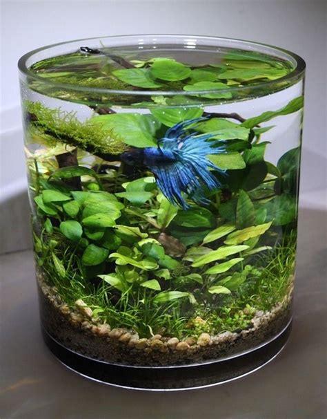 aquarium verre a pied plante aquatique jetez vous 224 l eau en 47 photos archzine fr