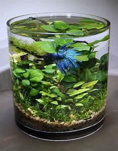 Grand Pot Plante : plante aquatique jetez vous l 39 eau en 47 photos ~ Premium-room.com Idées de Décoration