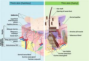 About Our Skin