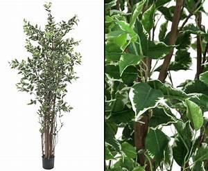 Ficus Benjamini Verliert Alle Blätter : kunstbaum ficus benjamini 1892 bl tter 240cm g nstig kaufen ~ Lizthompson.info Haus und Dekorationen