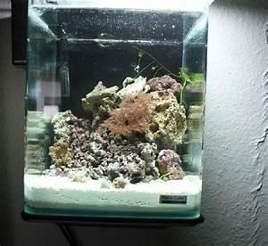 Nano Meerwasser Aquaristik  Nano Aquarium Beispiel 2    10