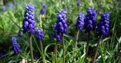 xzibit hit the floor top 28 are grape hyacinths poisonous wordpress slideshow of same width and flexible height