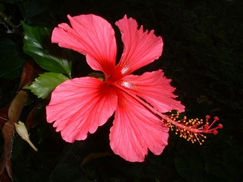 best tropical flowers tropical flowers on pinterest tropical flowers hibiscus and flowering plants
