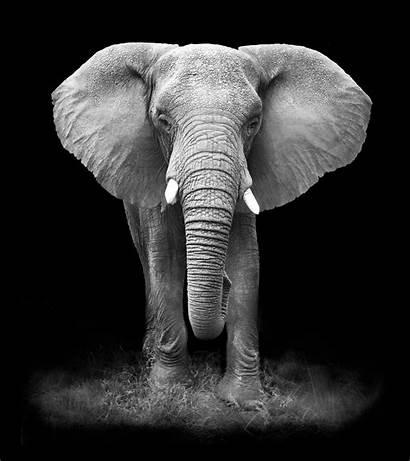 Elephant Glass Easy