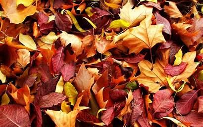 Autumn Leaves Leaf Wallpapers Desktop Fall Background