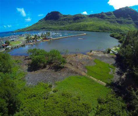 malama huleia mangrove clearing kauaicom calendar