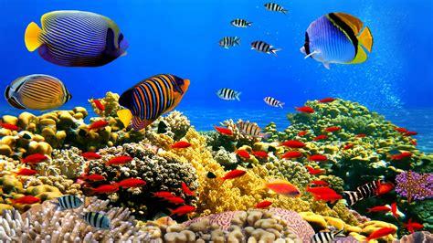 Free Lock Screen Wallpaper Underwater World Corals Tropical Colorful Fish Hd Desktop Wallpaper Wallpapers13 Com