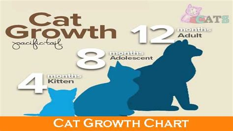 cat growth chart   growth  cats