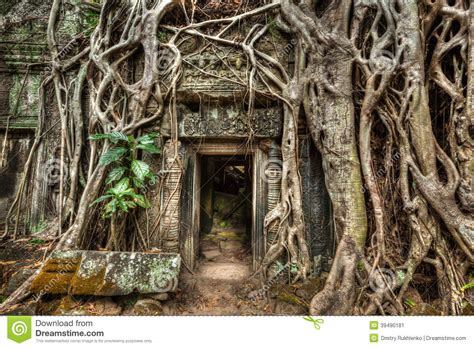 ancient door and tree roots ta prohm temple angkor