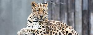 10 of the Most Endangered Animals in the World | Factual Facts
