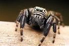 Arachnids - Arachnida - The Animal Encyclopedia