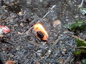 Allume Feu Cire : boite a feu de thewildwoman et allume feu ~ Premium-room.com Idées de Décoration
