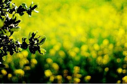 Yellow Dark Background Leaves Screen Wallpapers Close