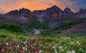 Wildflowers Field With Flowers Green Grass Sunset Mountain