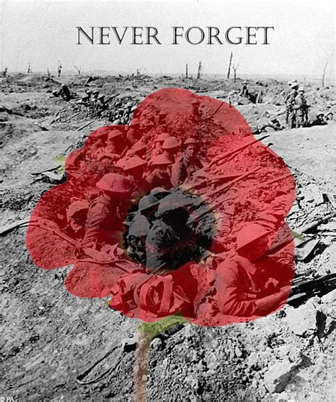 pictures of remembrance day poppies learning english with michelle remembrance day why the poppy