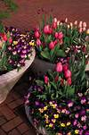Top 14 Outdoor Spring Flower Decor Ideas – Home Garden DIY spring flower garden ideas