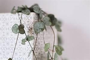Plante D Intérieur Pas Cher : entretenir ses plantes vertes d 39 int rieur astuces et ~ Dailycaller-alerts.com Idées de Décoration