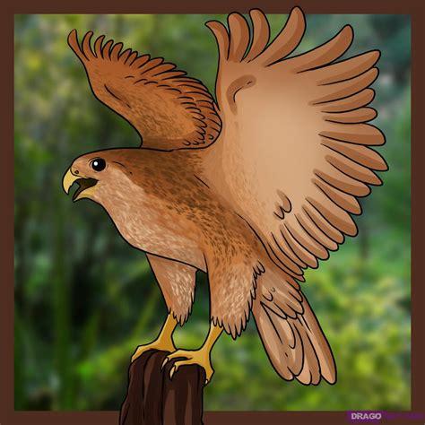 draw  falcon step  step birds animals