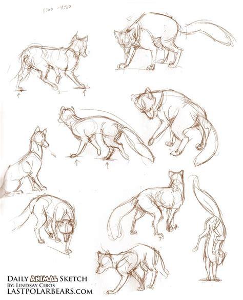 ideas  fox sketch  pinterest cute