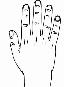 File Hand External Anatomy  Dorsum Svg