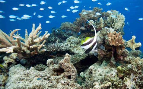 Dive Fiji - dive vanua levu original diving