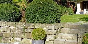 Pflanzen Zur Hangbefestigung : steilen hang bepflanzen bodendecker im garten pflanzen tipps steilen hang gestalten garten am ~ Frokenaadalensverden.com Haus und Dekorationen