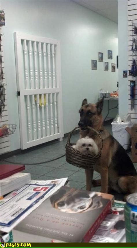 Dog With A Dog In A Basket Fugly