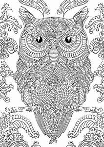 Pin by Nancy1761 on Owls | Pinterest | Adult coloring ...