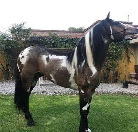 horses rare animals unusual