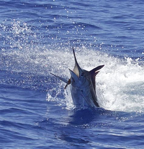 Fishing Charter Boat Hawaii by Hawaii Fishing Charter Prices Kona Fishing Packages