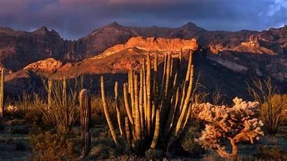 Arizona Cactus Organ Pipe Wallpapers National Park
