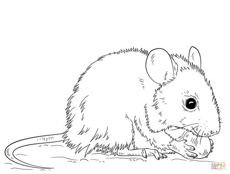 mouse coloring page  printable coloring pages