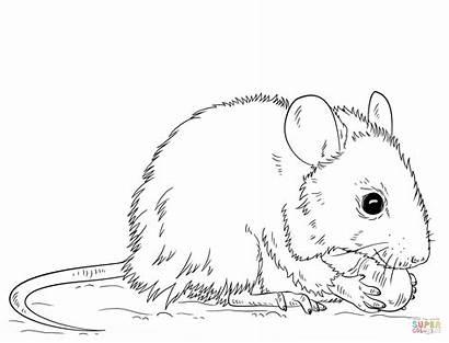 Coloring Rat Printable Maus Ausmalbilder Zum Vole