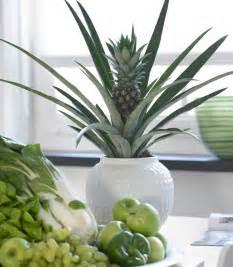ananas bromelia